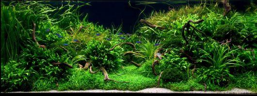 Растения водными растениями даже